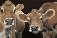 Hello There Cows Fine Art Print