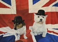 2 Dogs on a Union Jack Flag Fine Art Print