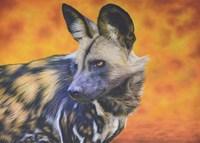 African Wild Dog Fine Art Print