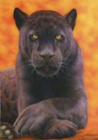 Black Jaguar Fine Art Print