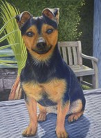 Coco the Jack Russell Fine Art Print