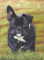 Peppa the French Bulldog Fine Art Print