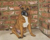 Troy the Staffordshire Bull Terrier Fine Art Print