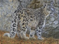 Snow Leopard Fine Art Print