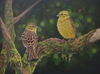 Yellow Hammer Birds Fine Art Print
