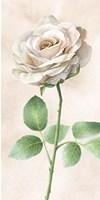 Ivory Roses Panel I Fine Art Print