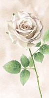 Ivory Roses Panel II Fine Art Print