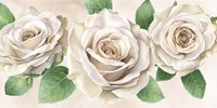 Ivory Roses Landscape II Fine Art Print