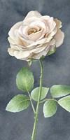 Ivory Roses on Gray Panel I Fine Art Print