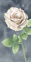 Ivory Roses on Gray Panel II Fine Art Print