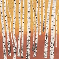 Birch Wilderness Fine Art Print