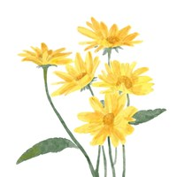 Wildflower Group I Fine Art Print