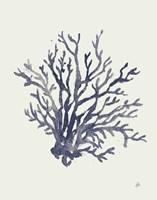 Ocean Finds XV Navy Fine Art Print