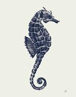 Ocean Finds VI Navy Fine Art Print