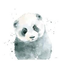 Panda Cub Fine Art Print