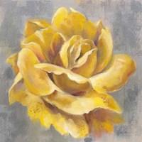 Yellow Roses I Framed Print