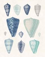 Blue Shell Assortment II Framed Print
