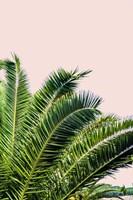 Tropical Leaves On Blush I Fine Art Print