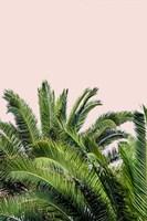 Tropical Leaves on Blush II Fine Art Print