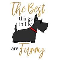 Puppy Positive IV Fine Art Print