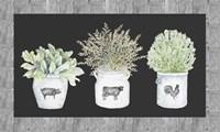 Potted Farm Arrangement Trio on Chalkboard Fine Art Print