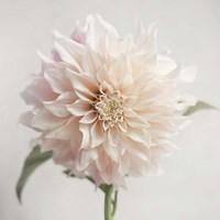White Bloom From The Garden Fine Art Print