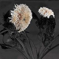 Sunflowers I Framed Print