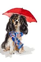 King Charles Spaniel In The Rain Fine Art Print
