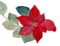 Bright Poinsettia II Framed Print