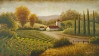 Vineyard In The Sun II Fine Art Print