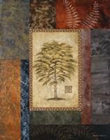 Eucalyptus Tree II Framed Print