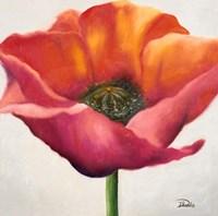Poppy Flower I Framed Print