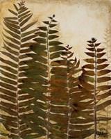 Ferns I Fine Art Print