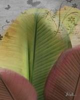 Butterfly Palm I Framed Print