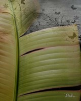 Butterfly Palm II Framed Print