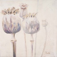 Poppy Seeds II Framed Print