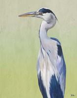 Blue Heron on Green II Fine Art Print