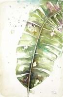 Watercolor Plantain Leaves II Fine Art Print