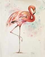 Flamingo II Framed Print