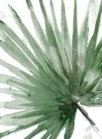 Palma Verde Close Up Framed Print