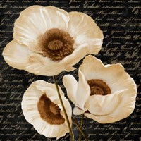 Evening Bloom II Framed Print
