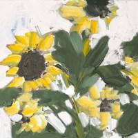 Sunflower Garden Fine Art Print