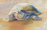 Tilly the Turtle Fine Art Print