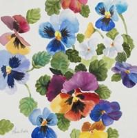 Pansy Delight Fine Art Print