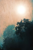 Jungle Canopy At Sunset Fine Art Print