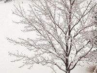 Winter Serenity Fine Art Print