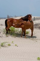 Corolla Mare and Yearling Fine Art Print