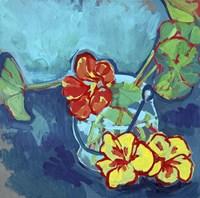 Nasturtium on Blue Fine Art Print