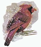 Cardinal Bird in the Snow Fine Art Print