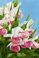 Pink Lady Slipper Flowers Fine Art Print